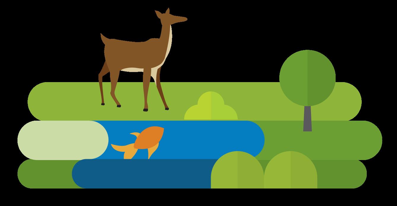 MessagePath4-Deer